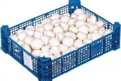грибные ящики пластик